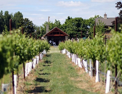Dineen Vineyard